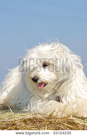 Funny dog on a straw bale