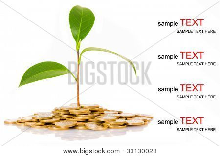 Green tree growing on money coins, isolate on white background