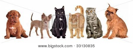 Group of cats and dogs, isolated on white background