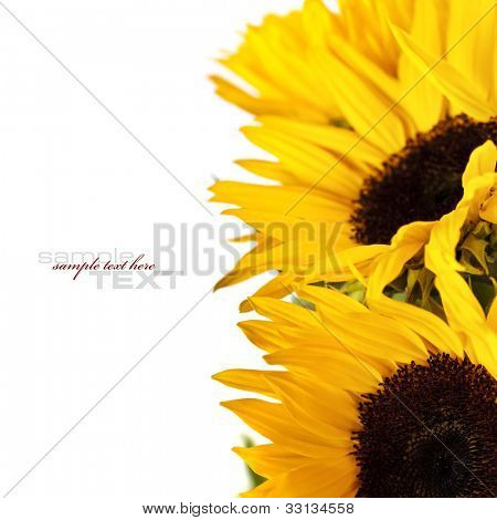Sunflower Frame on white background (with easy removable text)