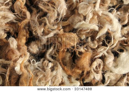 Wool Mutton Natural