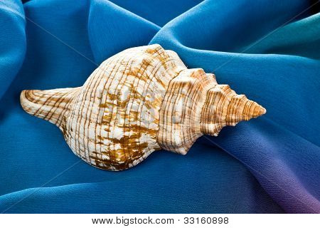 Old sea shell laying on blue silk