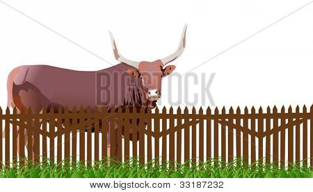illustration with bull in grass near fence isolated on white background