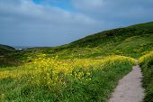 Kehoe Beach Trail To The Ocean  In The Spring At Point Reyes National Seashore, Marin County, Usa,   poster
