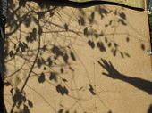 The Shadow Of Hand And The Shadow Of Tree.the Shadow Is A Wonderful Creation. poster