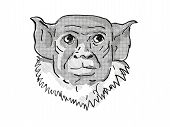 Retro Cartoon Style Drawing Of Head Of A Pied Tamarin, A Small Species Of Monkey In The Rainforest O poster