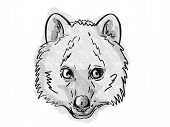 Retro Cartoon Style Drawing Of Head Of A Quokka, A Small Marsupial Found In  South-west Of Australia poster