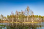 Island In The Bog, Golden Marsh, Lakes And Nature Environment. Sundown Evening Light In Spring poster