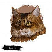 Somali Fox Cat, Long-haired Abyssinian, Blue Somali Kitten Isolated. Digital Art Illustration Pussy  poster