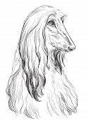 Afghan Hound Dog Vector Hand Drawing Illustration In Black Color Isolated On White Background poster