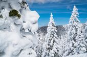 Thick Powder Snow Close Up On Trees Covered In Winter Snow. On Top Of The Mountain. Santa Fe Mountai poster