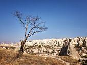 Dead Tree At The Rock Site Of Cappadocia. poster