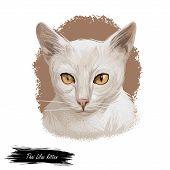 Thai Lilac Cat Or Korat, Si Sawat, Malet Isolated On White. Digital Art Illustration Of Pussy Kitten poster