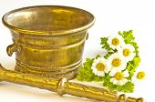 stock photo of feverfew  - mortar with feverfew - JPG