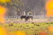Nature Landscape With Horses On Ranch. Horses In Ranch Nature Landscape. Countryside Landscape. Dome poster