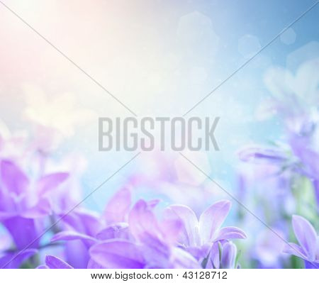 Campanula Floral Background