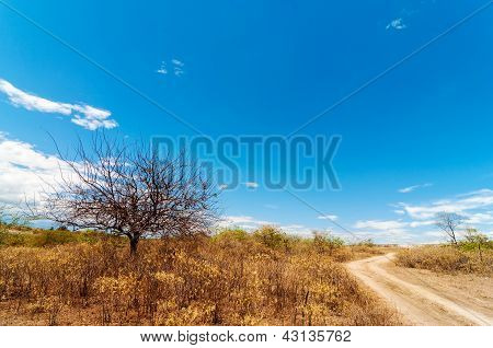 Leafless Tree and Road