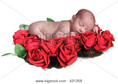 Baby Rose Wreath On White