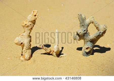 Three Coral On The Beach