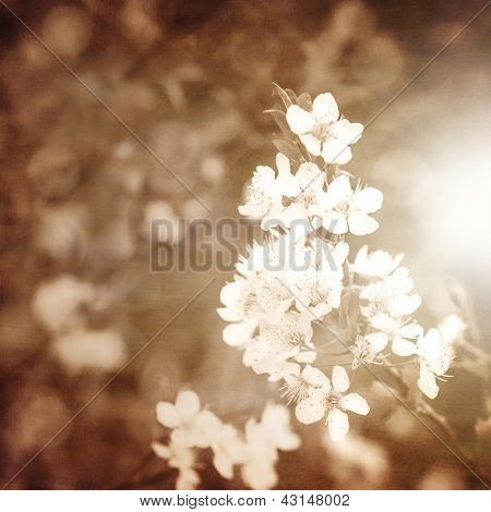 Picture of apple blooming branch, grunge photo of white tender flowers, springtime nature, blossom fruit trees, fresh flower, beige pastel floral wallpaper, selective focus, spring season concept
