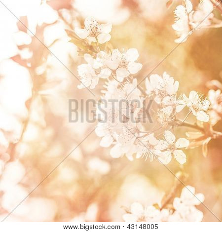 Picture of beautiful apple tree blossom, abstract natural background, grunge orange photo, fine art, spring season, little white flowers on tree branch, dreamy image, fresh floral twig