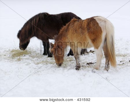 Tiny Horses