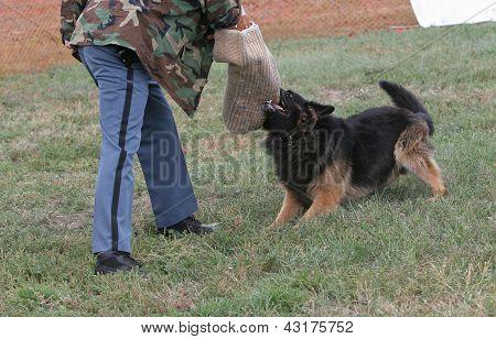 Police Dog Holds Target