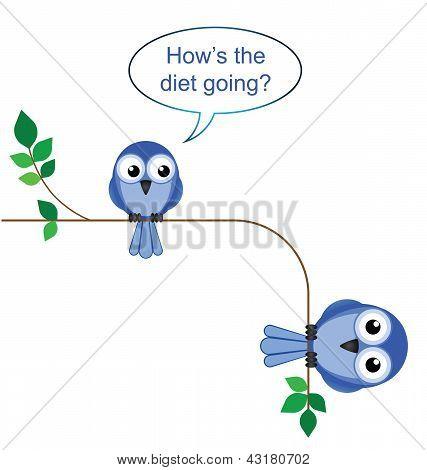 Bird diet