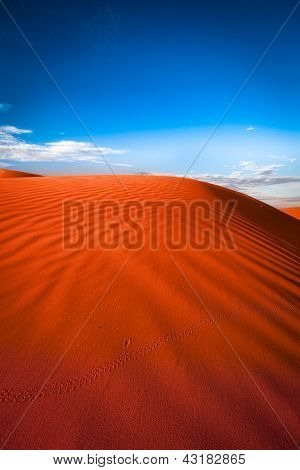 Animal tracks in red sand dune