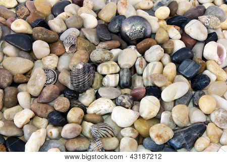 Sea Pebble