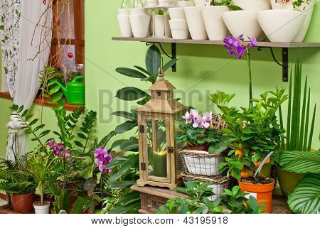 In Flower Shop