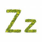 picture of storybook  - Leafy storybook font depicting a letter Z in upper and lower case - JPG