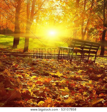 Bench in autumn park at sunset.