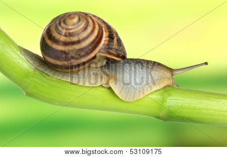 Snail crawling on green stem of plant on bright background