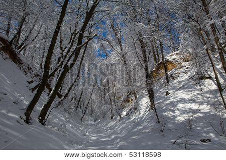 Loess ravine in winter