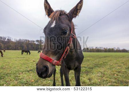 Young Horse En Face