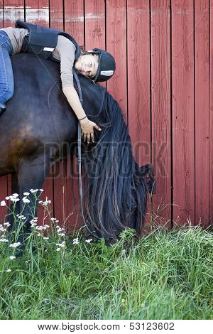 North Swedish Horse With Girl