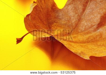 closeup of an autumn leaf and its reflection on a golden background