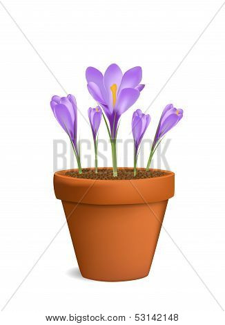 Crocuses in flowerpot vector illustration