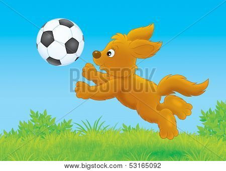 Pup playing a ball