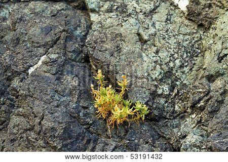 plant growing in rock crack, Oregon