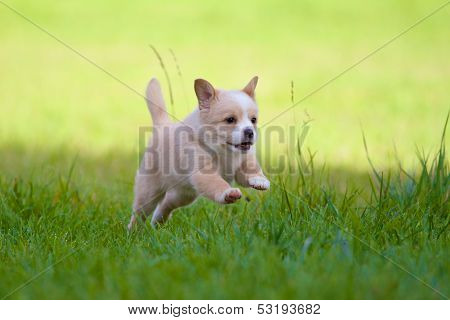 Puppy In Full Action