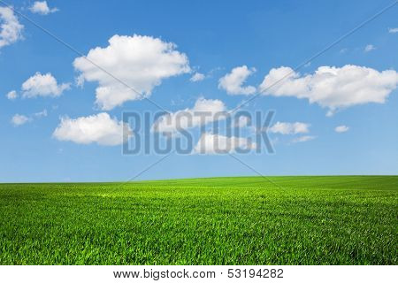 field  and perfect blue sky