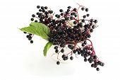 foto of elderberry  - Fresh elderberry in mortar on white background - JPG