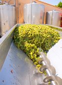 picture of crusher  - chardonnay corkscrew crusher destemmer in winemaking with grapes - JPG