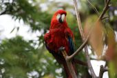 Colorful Parrot In A Tropical Forest