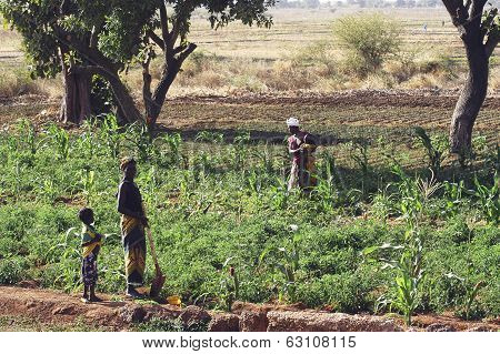 Market Garden Crops In Burkina Faso