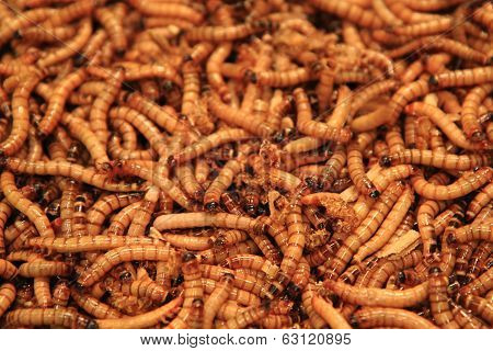 Worms As Exotic Food Background