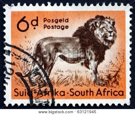 Postage Stamp South Africa 1954 Lion, Animal