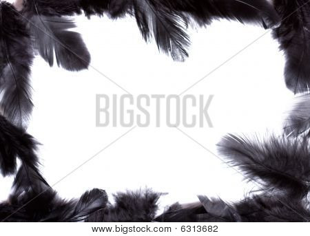 Frame Of Black Feather